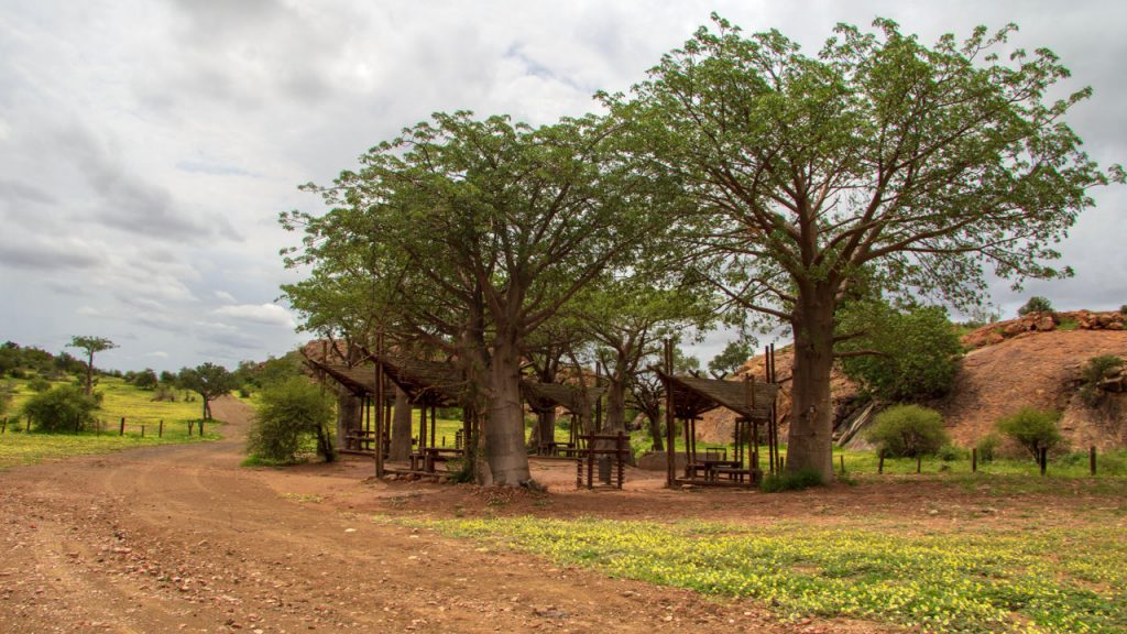 A circle of baobabs surrounds the Confluence Picnic Site in Mapungubwe National Park