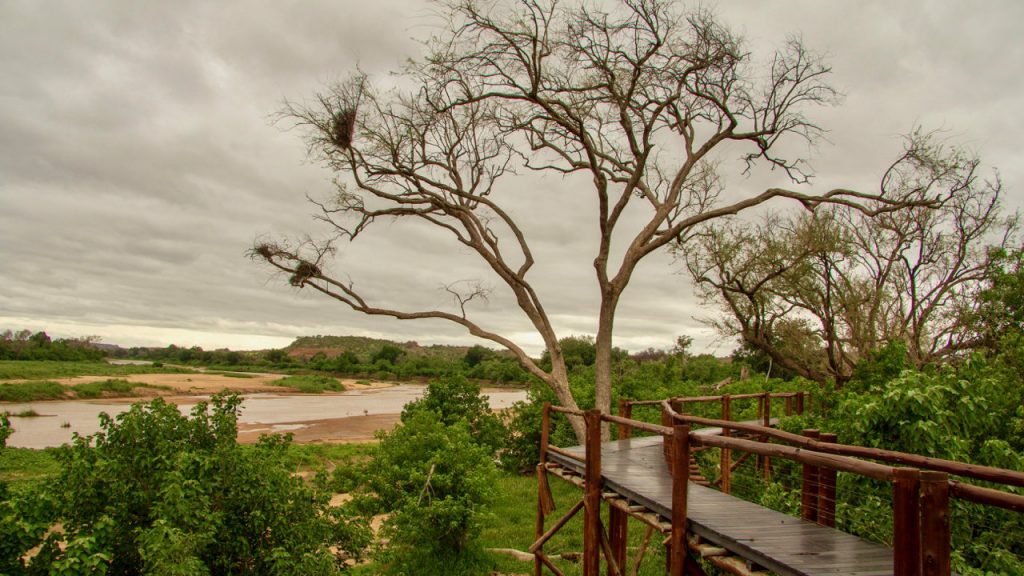 Treetop walkway along the banks of the Limpopo. River in Mapungubwe National Park