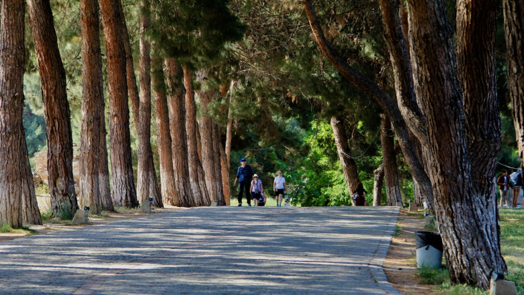 Large Cypress trees cast shade over a pathway