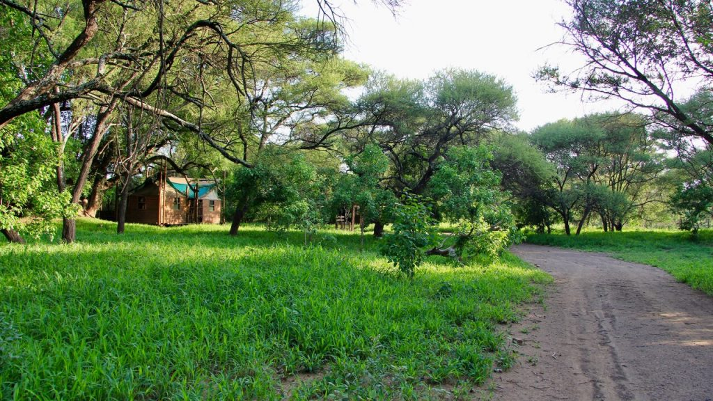 Sometimes it is about the destination Limpopo Forest Tented Camp